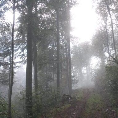 20161002_hafenlohrtalwandern-1