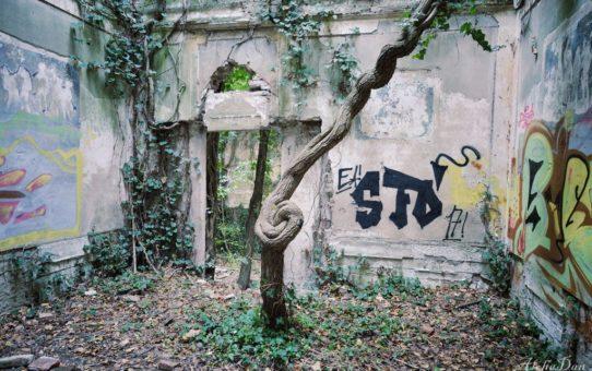 Casa Giungla [lost]