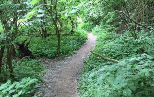 Wandern Dschungelpfad